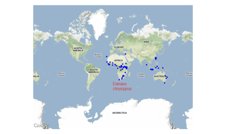 Map biodiversity records with rgbif and dismo packages in R
