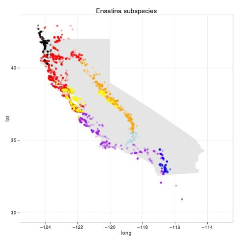 Exploring distributions of Ensatina salamander subspecies using rvertnet by Neil Kelly